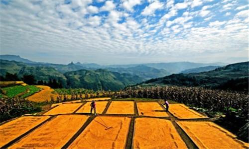 叶兴庆:以问题为导向推进农业供给侧结构性改革