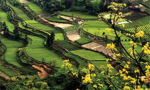 国家扶持农业发展的重点对象有哪些?图片