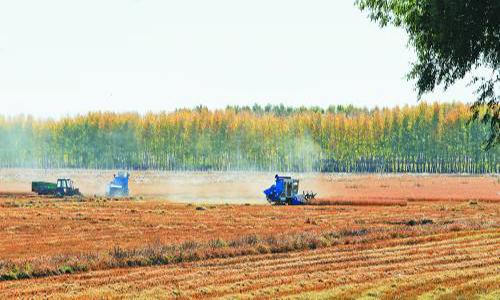"""黑龙江龙江县:""""一减五增""""农业结构调整"""