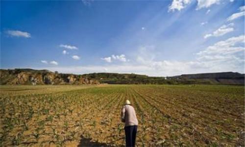 奎屯市重点优化调整农业结构