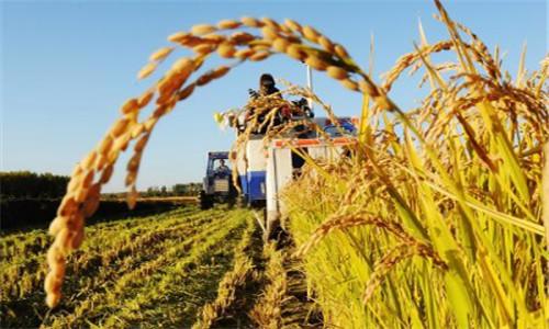 农业部:努力打造绿色高产高效创建升级版
