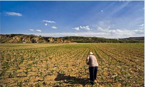 永久基本农田保护任务超额完成 质量明显提升